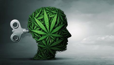 Как КБД влияет на мозг и способен ли он лечить психозы?