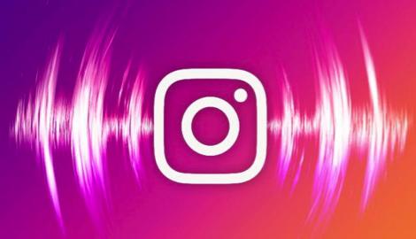 Instagram: Sweet Seeds