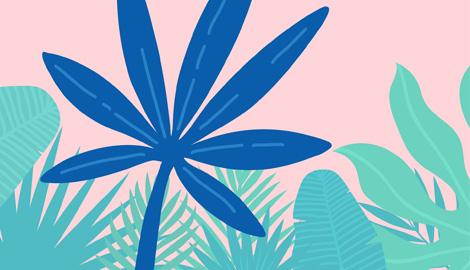 Тропический хай