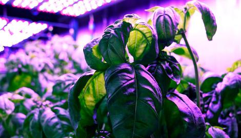 Роботы улучшают вкус растений?