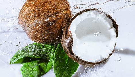 Гидропоника на кокосе: основы основ