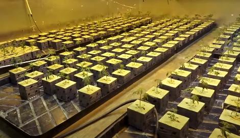 Видео: Подпольные фермы Лос-Анджелеса (Взгляд изнутри)