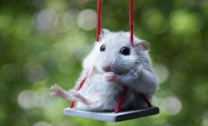 Во всем виновата говорящая мышь