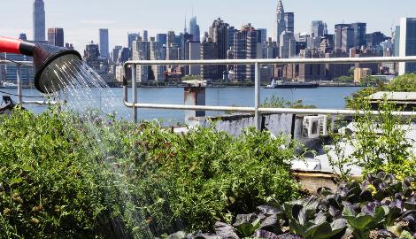 Городские фермы как новая веха в истории земледелия