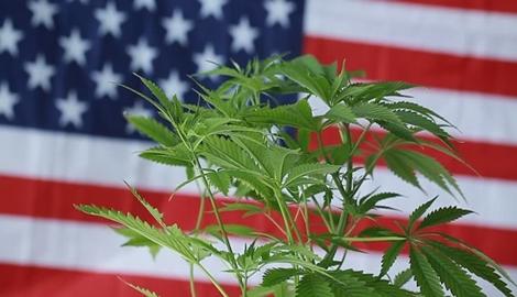 Штаты, в которых пройдет легализация в 2020