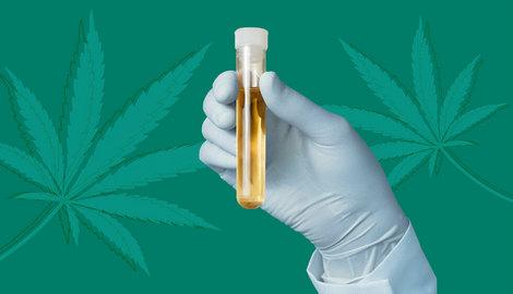 Как не провалить тест на марихуану