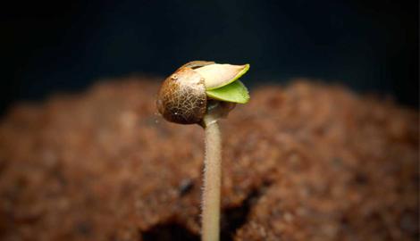 6 недель от семки до харва