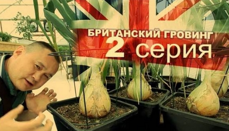 Британский гровинг. 2 серия
