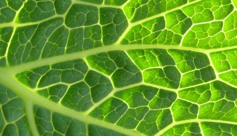 Искусственные листья теперь умеют фотосинтезировать