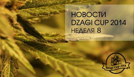 Новости  DzagiCup 14. Неделя 8