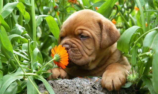 Блог Dinafem: Как скрыть «тот самый запах»?