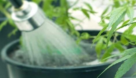 Как промыть больное растение