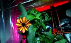 Космические цветы