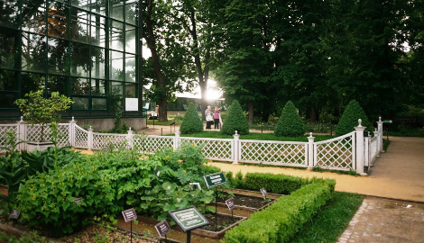 Ботанический сад МГУ. Взгляд изнутри