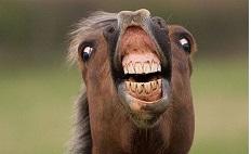 В Россию попытались ввезти марихуану на коне
