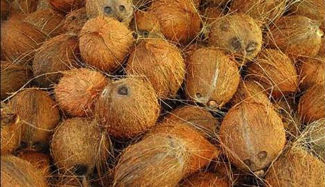 CANNA разрушает мифы о выращивании на кокосе. Часть 2