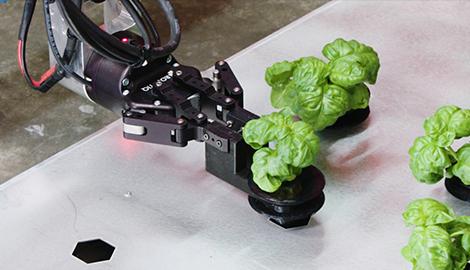 Роботизированная гидропоника