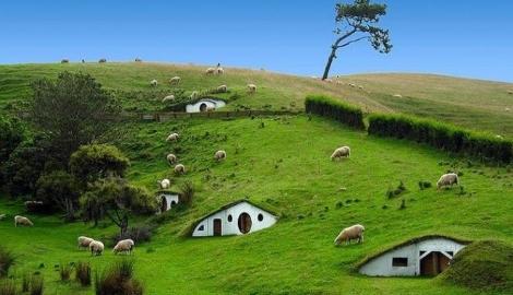 Новая Зеландия легализовала медицинскую mj