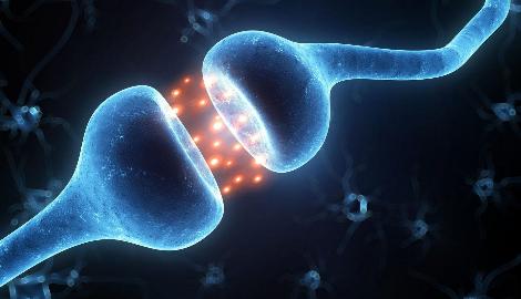 Видео: Как работает эндоканнабиноидная система