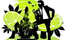Блог Dutch Passion: AutoDaiquiri Lime. Простое выращивание