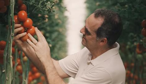 54 тонны томатов в неделю на гидропонике