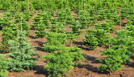 Новый лес в Воронеже