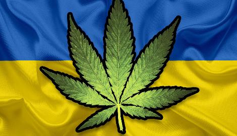 В Раде готов проект о легализации медицинского каннабиса