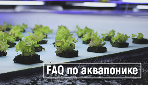 Аквапоника: FAQ, принципы работы + 1 handmade вариант