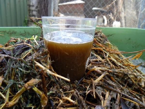 АКЧ (аэрированный компостный чай)