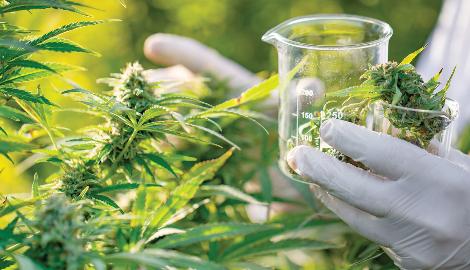 В Бразилии появился первый препарат на основе марихуаны
