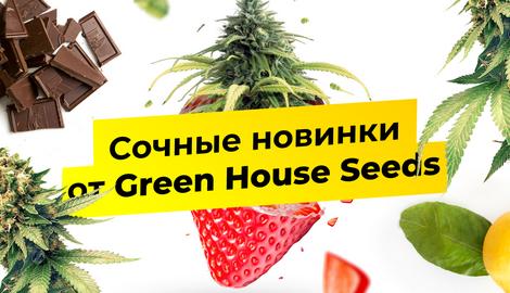 Сочные новинки от Green House Seeds