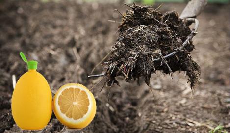 Humboldt seeds: Бодрящий лимонный сок… в твоем аутдоре!