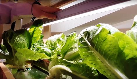Видео: Салат на гидропонике