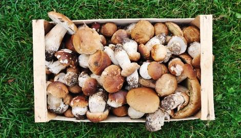 Пелле Янсен «Всё о грибах»