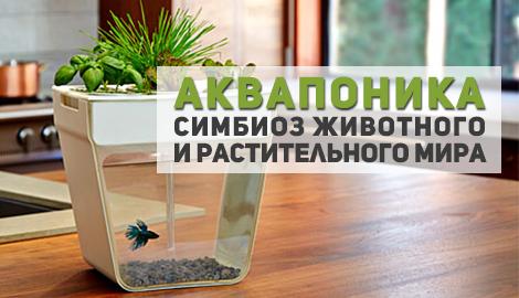 Аквапоника. Симбиоз животного и растительного мира