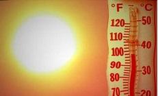 Всякая живность тепло да солнышко любит