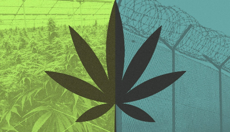 Декриминализация и легализация марихуаны. В чем разница?
