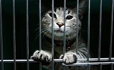 Украл, выпил – в тюрьму