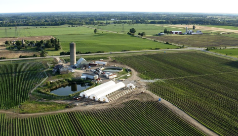 Как выглядит ферма каннабиса в 40 га