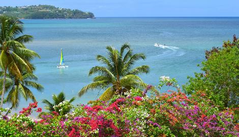 Легалайз на Карибских островах