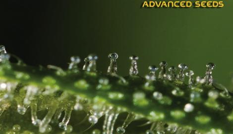 Advanced Seeds: нами движет дух инноваций и стремление сохранить планету!