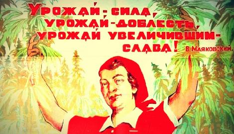 В России решили возродить производство конопли