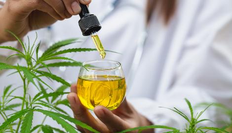 Казахстан будет выращивать медицинскую марихуану