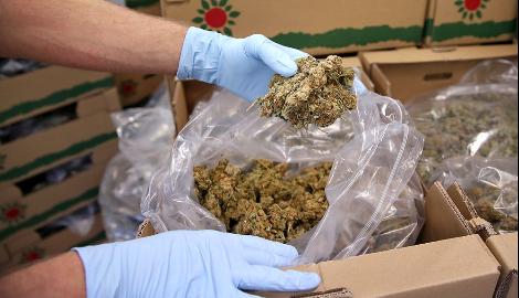 В Москву отправили 12 кг марихуаны почтой