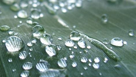 Мысли по поводу полива растений