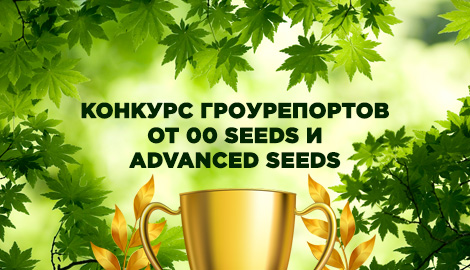 Конкурс гроурепортов от 00 Seeds и Advanced Seeds