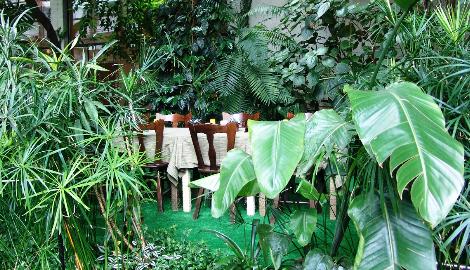 Петербургские кафе с живыми растениями