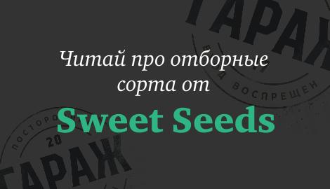 Сладкая 10-ка от Sweet Seeds