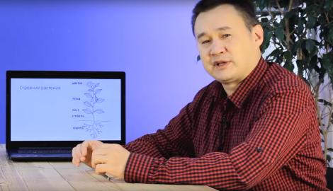 Видео: Урбан Гровер и уроки растениеводства (GORSHKOFFTV)