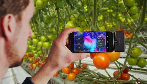 Технологии дополненной реальности в Сити-Фермерстве